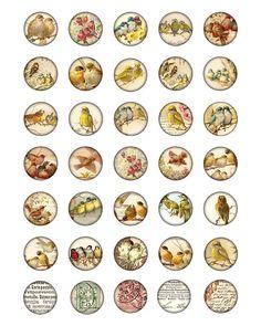 círculos de 1 pulgada de aves Digital Collage hoja por 300dpi