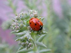 Los insectos de mi jardín