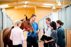 The Melbourne Veterinary School Equine Centre provides state-of-the art surgical and medical care. Cases are referred from all over Victoria and interstate to be examined and treated by the largest contingent of veterinary specialists in Australia. University Of Melbourne, International University, University Degree, Top Universities, Veterinary Medicine, Medical Care, Centre, Victoria, Cases
