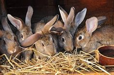 Raising Rabbits for Meat - Sustainable Farming - MOTHER EARTH NEWS