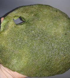 Modelli di acquario per tartarughe ed i prezzi scegli il for Tartarughiera per tartarughe grandi