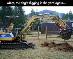 Dump A Day Attack Of The Funny Animals - 20 Pics
