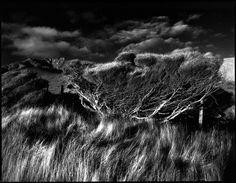 Original Artwork: Manuka, Mt Karioi by Stuart MacKenzie  #photography #newzealand #nzphotographer #blackandwhite #finearts #thelittlegallery #digitalprint