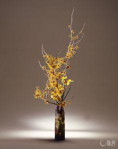 早春のまだ寒い時期に春の訪れを告げるまんさく。枝にまとわりつくように咲く花の美しさをストレートに表現しました。ラッパずいせんが色の調和を深めます。花材:まんさく、ラッパずいせん 花器:ガラス花器(エミール・ガレ) In the early spring when it's still cold outside, Japanese witch hazel tells us that spring has come. This is a straightforward expression of the beauty of flowers that wrap the branch. Daffodil deepens the floral harmony. Material:Japanese witch hazel, Daffodil Container :Glass vase  #ikebana #sogetsu