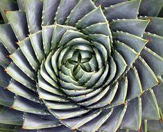 多肉植物。まるでアートのような造形。