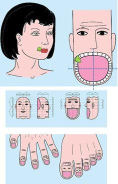SuJok / Corresponding / Teeth on Fingers