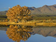 Global Gallery Nature Photographs Cottonwood Fall Foliage with Magdalena Mountains, New Mexico by Tim Fitzharris Photographic Print on Canvas Size:. Mexico Art, Land Of Enchantment, Painting Edges, Stretched Canvas Prints, Outdoor Gardens, Mountains, Art Prints, World, Catalog
