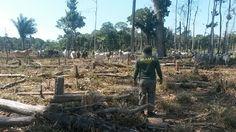 Desmatamento na Amazônia caiu 16% no último ano diz ministro do Meio Ambiente