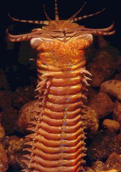 Giant sea worm