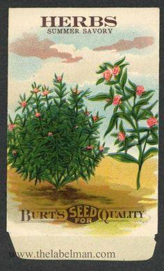 HERBS, Summer Savoy, Antique Seed Packet