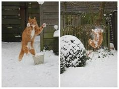 snowbaaaaaaaaaaaaalll