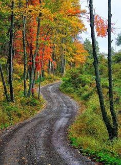 Country road in fall (North Carolina) by Robert Donovan