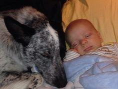 Ponen al bebé en la cama y entran los perros. Cuando vuelven se da cuenta de algo…