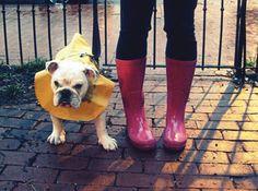 ha doggy rain coat
