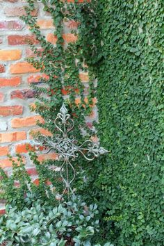 Wall Climbing Plants, Climbing Vines, Hanging Plants, Indoor Plants, Plant Wall, Plant Decor, Outdoor Landscaping, Outdoor Gardens, Landscape Design