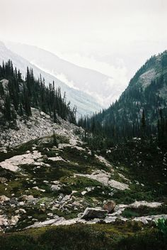 mount revelstoke national park, british columbia #nature #landscapes
