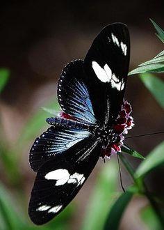Butterfly by Jim Steinmiller
