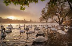 --Sunny Morning-- by Marek Kijevský on 500px