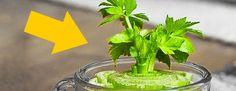 Ocho vegetales que se pueden comprar una vez y luego crecen para siempre #viral