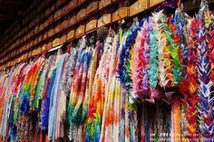 https://flic.kr/p/nUB8Yo   Kyoto-Beautiful colors   紙鶴 一串一串的美麗色彩, 好像瀑布傾瀉而下。