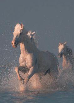 (90) Twitter Beautiful Horses, Animals Beautiful, Cute Animals, Wild Horses Running, Big Brown Eyes, All About Horses, Appaloosa Horses, Horse Photography, Fauna