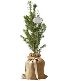 Real Simple Colorado Spruce   Forget the typical cookie-cutter gifts—try these special, hand-picked items instead.Findmore great gifts for everyone on your list here.