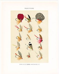 C F Orvis Fly Fishing print with flies for trout