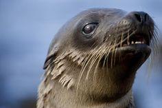 Galapagos Sea Lion Pup in Galapagos Islands