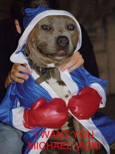 Boxing 'Rocky' Pittie