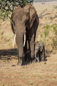 21 lecciones importantes de la vida que puedes aprender de los elefantes