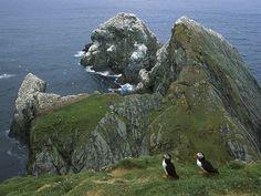 I WILL see the Shetland Islands before we leave Scotland