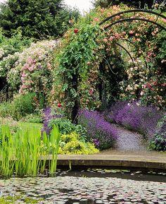 Royal National Rose Society Gardens - Hertfordshire, England
