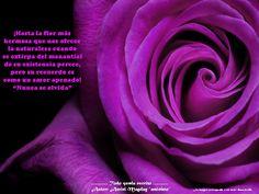 Hasta la flor más hermosa que nos ofrece la naturaleza.
