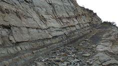 Environ 80 fossiles de vertébrés ont été découverts dans la région de Gaspé, en…