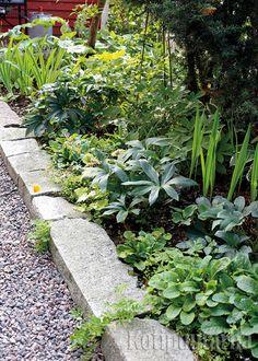 Graniittinen reunakivi kestää aikaa. Raoista rönsyilevät kasvit pehmentävät jyhkeää vaikutelmaa.