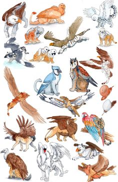 Lol, parrot griffin. I love griffins that aren't just lion and eagle. Shame there isn't one that's part lammergeier on here.