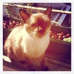 O gato Caqui (em memória)