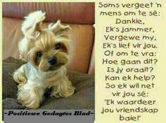 11 Afrikaanse Quotes, Goeie More, Night Messages, Positive Thoughts, Good Morning, Friendship, Positivity, Sayings, Men