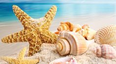 Beach: Summer Seashells Sands Shell Ocean Peaceful Shine Star Glow Sea Starfish Shells Blue Scallops Sky Colors Water Nice Sand Nature Beauty Beautiful Lovely Treasure Rays Time Clouds Pretty Beach View Pictures Desktop Wallpaper for HD High Definitio Shell Beach, Ocean Beach, Summer Beach, Pink Summer, Beach Sunsets, Seaside Beach, Free Summer, Summer Colors, Summer Wallpaper