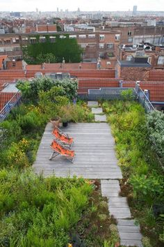 Wild rooftop gardenEn Socyr somos especialistas en Impermeabilizacion con epdm resitrix totalmente adherido para Cubiertas ajardinadas.Colaboramos con la empresa especialista en cubiertas ajardinadas llamada ZINCO . Jorge del préstamo es el técnico en España .Green roofs insulate like a blanket, saving energy; they provide natural habitats for birds, butterflies, honeybees, lady bugs, and migrating birds. On this roof, soil depth ranges from four to eight inches. Más información en…