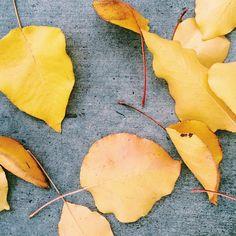 photo by happymundane on Instagram #leaves #fall #yellow