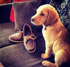 two of lifes essentials . boat shoes and a good dog