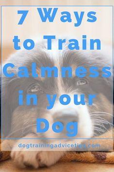 Dog Obedience Training: 7 Ways to Train Calmness in your Dog Basic Dog Training, Puppy Training Tips, Potty Training, Training Dogs, Crate Training, Training Classes, Training Videos, Safety Training, Leash Training