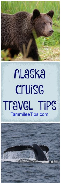 Best Alaska Cruise Travel Tips! Packing Tips, Excursions, Ports of Call and more! What you need to know to prepare for your Alaskan Cruise Vacation!  via @tammileetips
