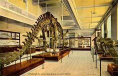 Old coloured postcard from the Carnegie Museum, showing Diplodocus. HD