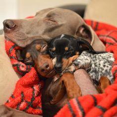 Trio ternura: Melhores amigos cachorros vivem abraçados e fazem sucesso internet afora | Virgula