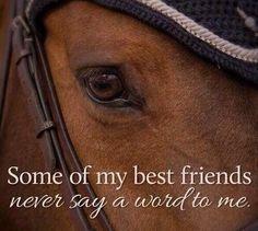paarden zijn me vrienden