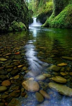 Punch Bowl Falls is a waterfall on Eagle Creek in the Columbia River Gorge National Scenic Area, Oregon, United States. Eagle Creek d. Punch Bowl Falls is a waterfall on Eagle Creek in the Columbia River Gorge Nati. Beautiful Waterfalls, Beautiful Landscapes, The Places Youll Go, Places To See, Beautiful World, Beautiful Places, Trees Beautiful, Natur Wallpaper, Nature Pictures