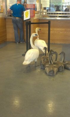 Cygnet's Allowance Day, Tullamore Social Welfare office, County Offaly, in the midlands of Ireland..