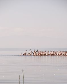 Flamingos in Nakuru National Park, Kenya
